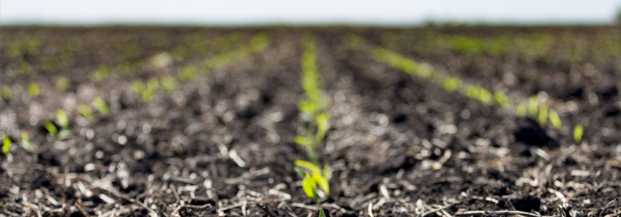 Protecting Your Investment – What Are My Nitrogen Options for Late-Planted Corn?